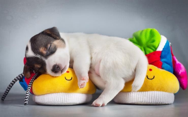 http://smart-dogs.ru/upload/iblock/db4/db411e24e10aaf9b546bde6ee58d5335.jpg